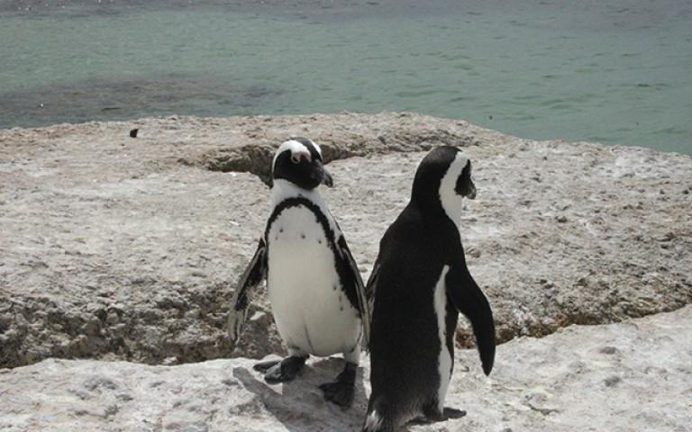 Pingu3